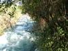 Tel Dan Nature Reserve